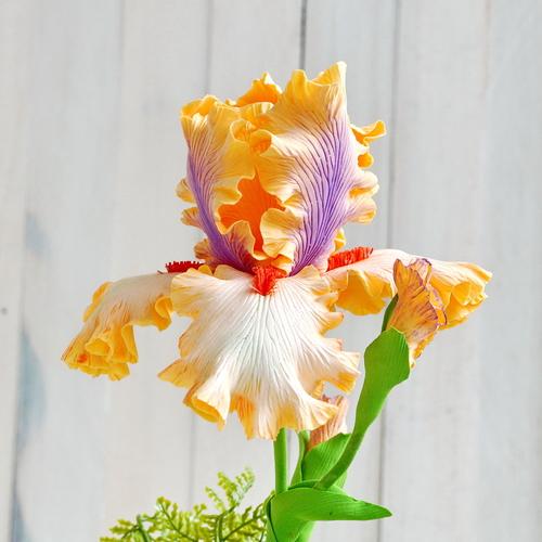 Photo of Цветок ириса.