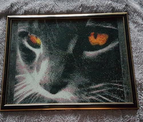 Фото для Кошачий взгляд