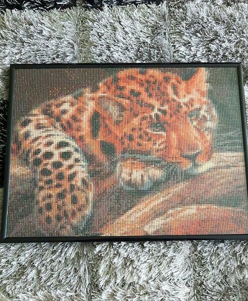 Фото для Леопард