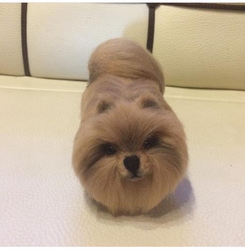 Фото для A dog on order, a realistic felt dog, a needle felt dog, woolen dog, made to order